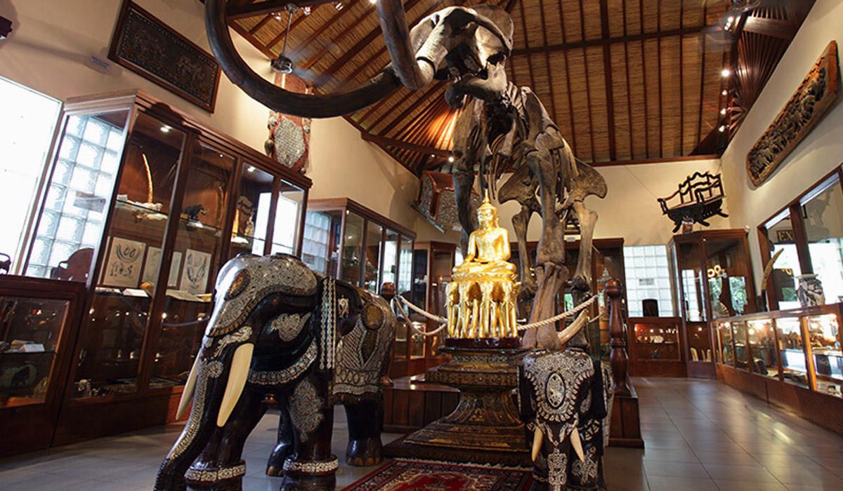 BOOK ONE DAY BEFORE!!!In the still of the misty forest of Taro at nightfall, our elephants take you on Bali's only twilight elephant trek. Enjoy the Elephant Education Show at dusk before a night safa
