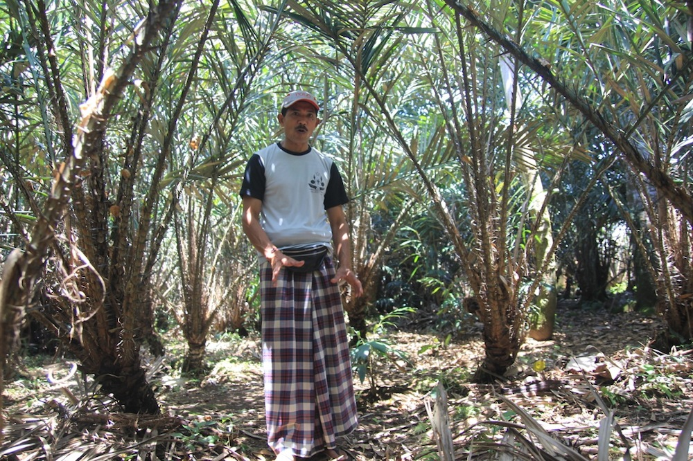 The cool, hilly village of Sibetan is proclaimed to be the area with the best salak fruit (the sweet