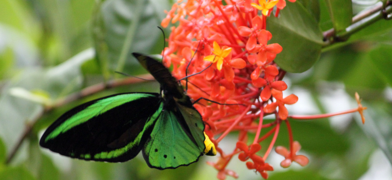 Bali's renowned butterfly park is an insect and butterfly conservation facility that is purpor