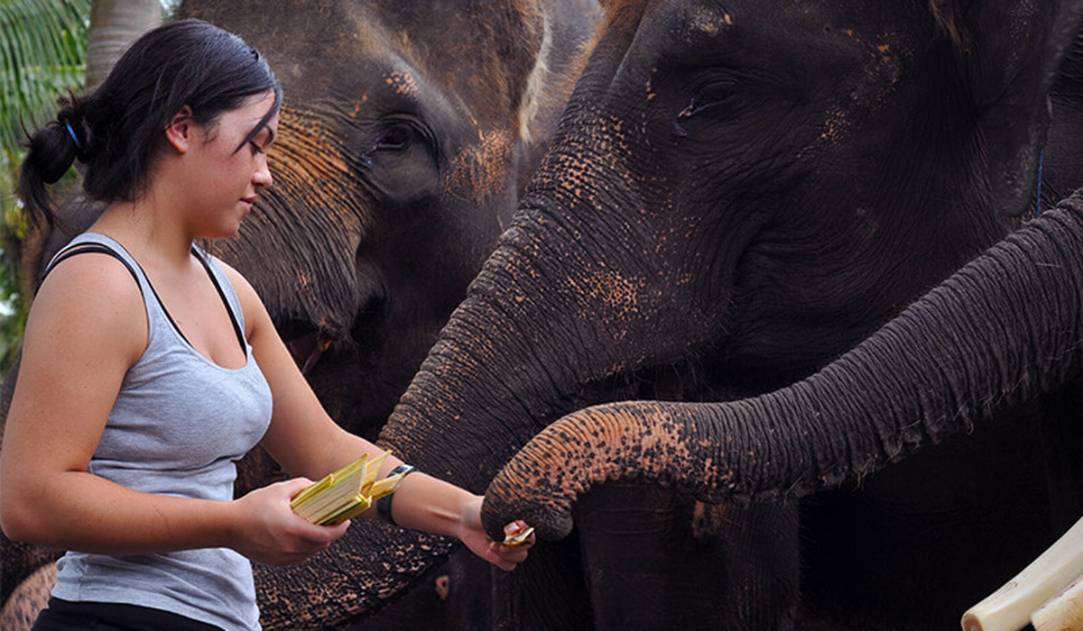 BOOK ONE DAY BEFORE!!!Package Includes : Hose, wash, scrub, and caress your new found friend, as you experience a unique connection with one of our elephants in a spectacular tropical setting as