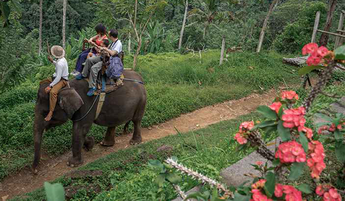 BOOK ONE DAY BEFORE !!!------------------  --------------------Elephant Trekking 	Befriend a great Sumatran Elephant on our Adventure Elephant Trek! safely perch on the broad back of Elephant, pa