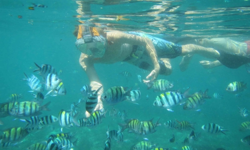 Hot Deal Tir- Har Snorkeling