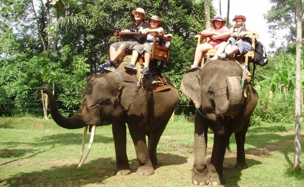 Offering a variety of Sumatran elephant rides that range in length from 15 minutes to one hour, the