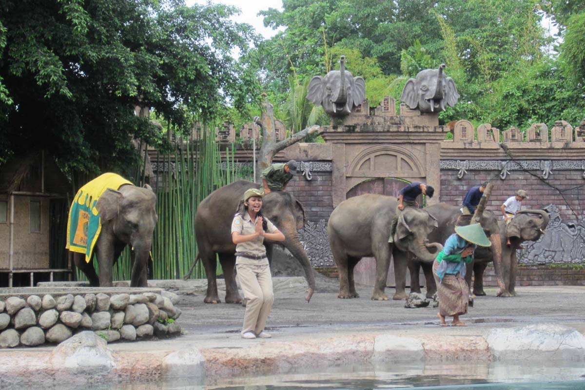 BOOK ONE DAY BEFORE!!!Enjoy the best safari experience in Bali at the home of hundreds of amazing animals representing over 60 species, including some rare and endangered species such as the Komodo, O