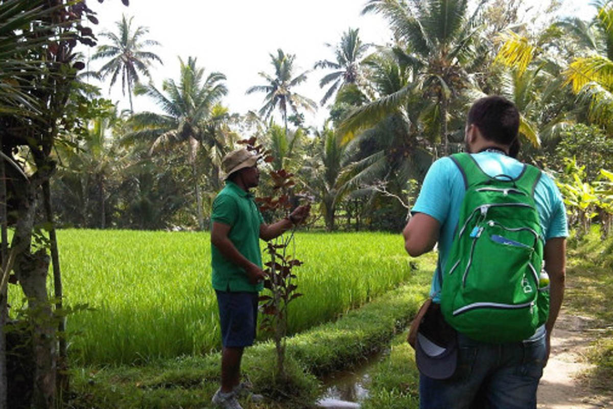 For centuries the Balinese have used a wide range of native plants and herbs for therapeutic, medi